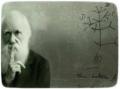 Darwin Teorisi ve Müslümanlar