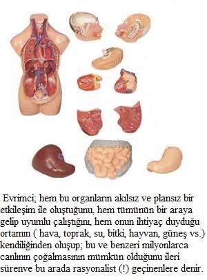 evrimcikim-denir-1