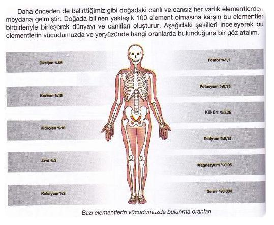 mineral-insan-beden1-1